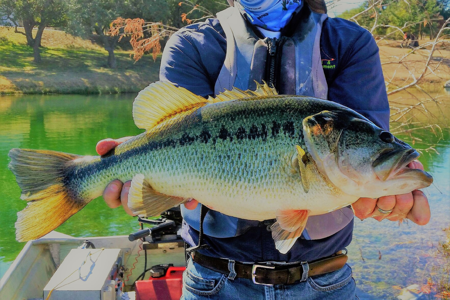 Largemouth bass stocked in private lakes require abundant forage fish